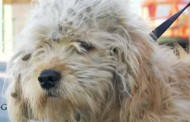 A transformação que salvou a vida de um cachorro